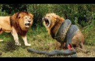 Animal Fighting